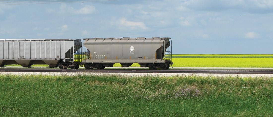 Rail cars in front of a canola field.