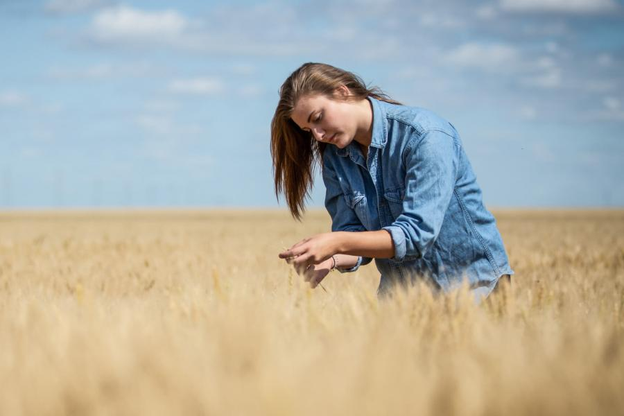 A picturesque view of a wheat field with a student standing in the middle taking a close look at the wheat stalks.