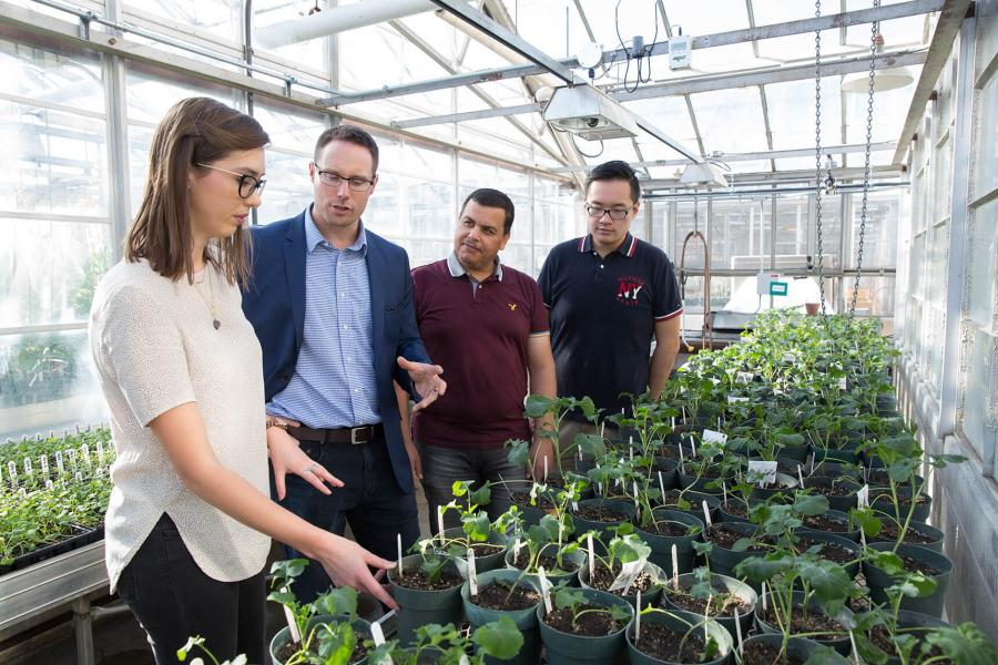 Canola breeding team in greenhouse