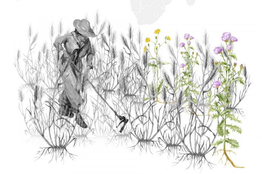 drawing of a man gardening