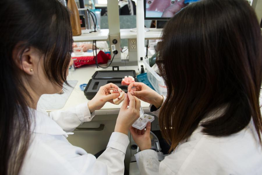 Dental students looking at a denture mold in a lab.