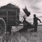 Photo, Forking hay onto trailer