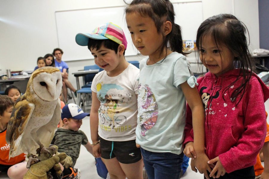 Three Mini U students being introduced to a live barn owl during an all about animals program.