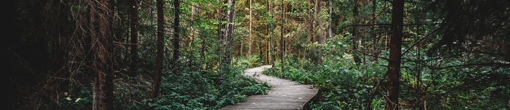 Plan My Career Path Banner, A wooden path meandering through a remote foest with light trickling through the canopy.